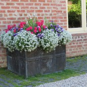The Lead Grid Planter C