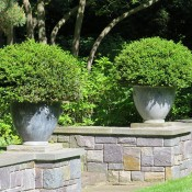 The Lead Lion's Head Cup Planter on Plinths