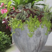 planters-lead-lions-head-cup